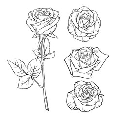 Vector Black and white version set of rose. Realistic hand drawing of red rose, decoration element. Sketch style vector illustration isolated on white background. Symbol of love