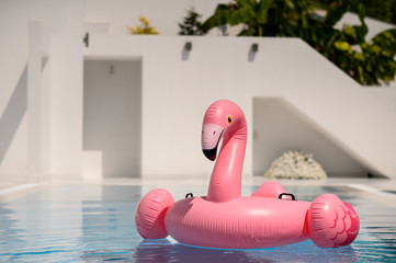 Foto op Canvas Flamingo Pink flamingo in a swimming pool