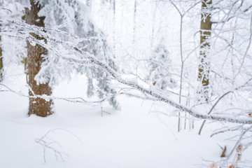 winter snow covered snow forest