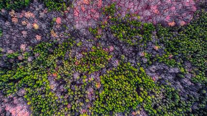 Looking down on trees in Virginia