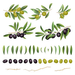 Green and black olives with leaves and branch collection. Vector illustration