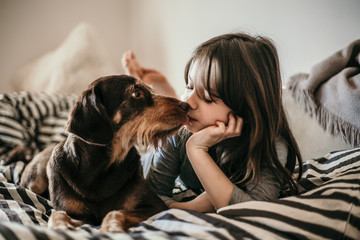 Beautiful female old dog kisses young little girl in the bedroom