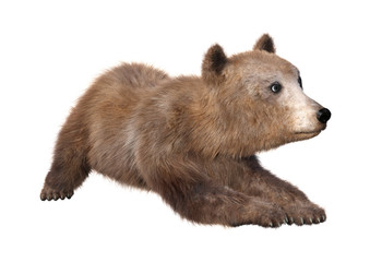 3D Rendering Brown Bear Cub on White