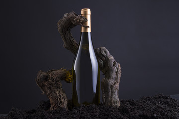 Wine Bottle With Vine to embrace the Bottle, From Hearth and Black Background