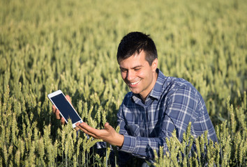 Farmer with tablet in green wheat field