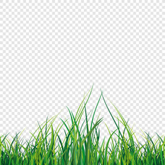 Vector illustration of a green grass field