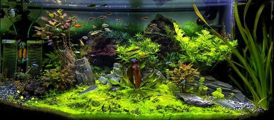 Aquarium et poissons tropicaux