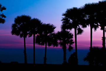 silhouette of palm trees with sunset background