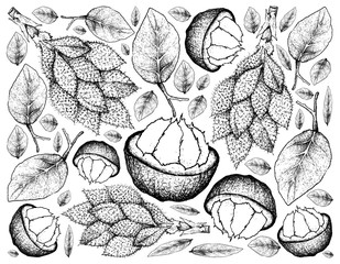 Hand Drawn Background of Santol and Luk Rakam Fruits