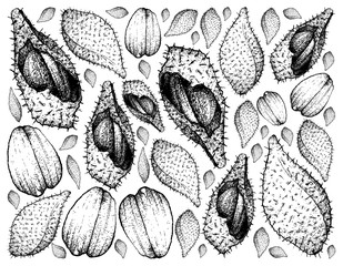 Hand Drawn Background of Luk Rakam Fruits