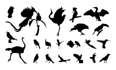 set of Various  Bird Silhouette vector illustration
