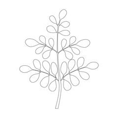 Moringa tree, Continuous one line