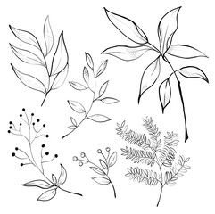 collection of foliage and branches