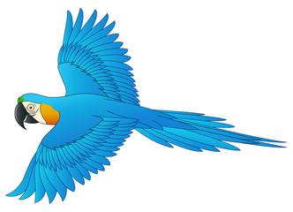 Cute macaw bird cartoon flying. Vector illustration