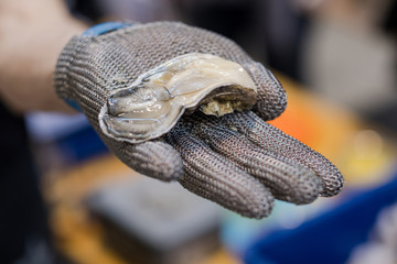 Hand in metal cut resistant glove is offering a freshly opened oyster on a fish market.