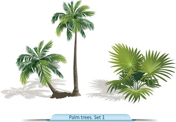Vector set of palm trees.