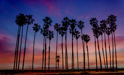 Tropical Beach sunset with hight Palm trees sihouette in California
