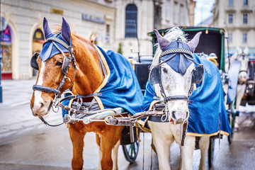 Horses in crew waiting to tourists around the beautiful city of Vienna, horses with vintage cab are famous iconic landmark in Vienna, Austria.