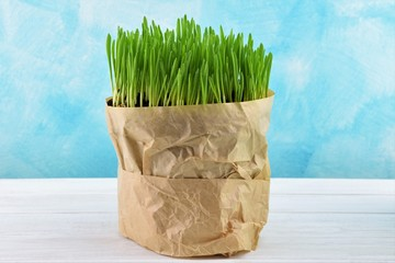 Young fresh green grass in paper bag