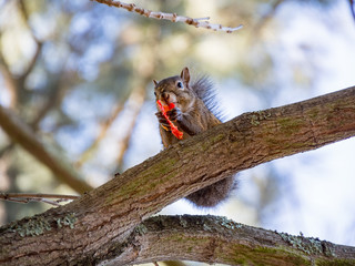 Cute little squirrel eating