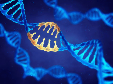 Double helix DNA molecule with modified genes , Correcting mutation by genetic engineering