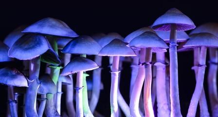 Color magic mushrooms - psilocybe Wall mural