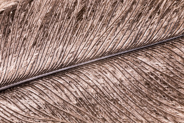 Super macro of small ostrich bird feathers