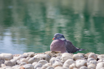 Zen garden serene nature image. Serene bird by ornamental pond.