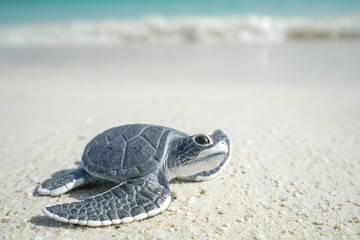 Papiers peints Tortue Little sea turtle on the sandy beach