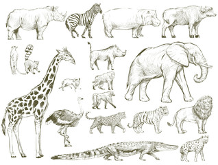Safari wildlife animal sketch drawing set illustration