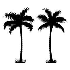 Palm tree 002