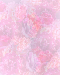 Collage of Pastel Roses