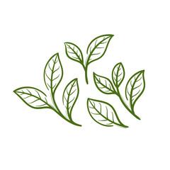 leaf tea illustration