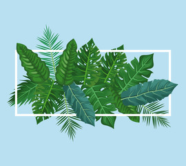 Leaves and plants frame vector illustration graphic design vector illustration graphic design