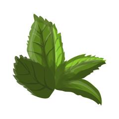 Green leaf of a flower