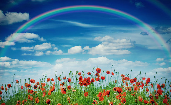 Colorful rainbow over a meadow with blooming poppies