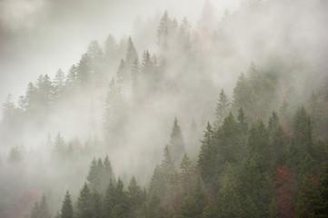 Bosco nella nebbia mattutina nei pressi del comune di Tarvisio
