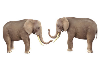 Two elephants. 3D image isolated on white background