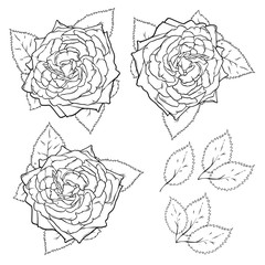 Vector line art set of roses and leaves, vector illustration isolated on white background