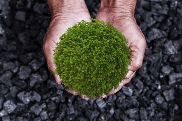 Environment conservation concept : tree, plant in the man hands of coal background. Picture idea about coal mining or energy source, environment protection. Conservation of natural resources.
