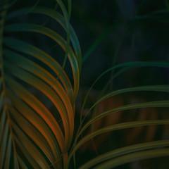 Tropical Palm leaf background.