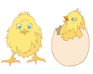 vector chicks. chicken in the shell