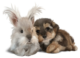 The Yorkshire Terrier and the white rabbit