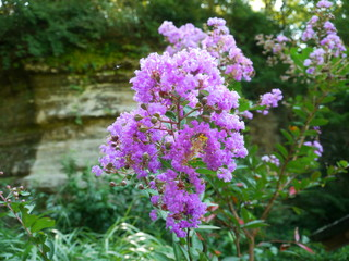 花/flower/紫