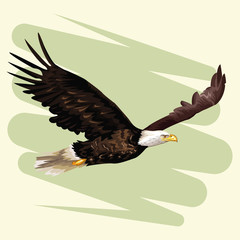 Eagle frying drawing vector illustration graphic design