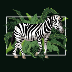 Zebra with leaves around vector illustration graphic design