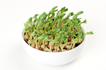 Snow pea microgreen in white porcelain bowl. Cotyledons of Pisum sativum also mangetout and sugar peas. Green, young plants, seedlings and sprouts. Macro food photo, close up, front view, over white.