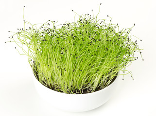 Leek microgreen in white porcelain bowl. Green shoots of Allium ampeloprasum with seed peels on the top. Stalks or stems of leek. Vegetable sprouts. Macro food photo, close up, front view over white.