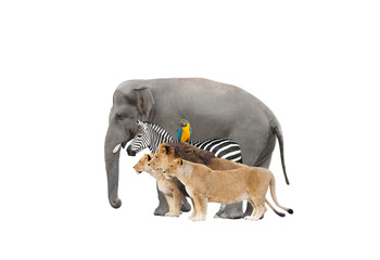 elephant and zebra and lions and parrot on white background isolated