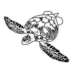 hand draw sea turtle, vector